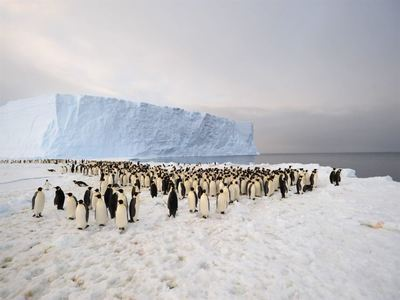 Cruise To Antarctica