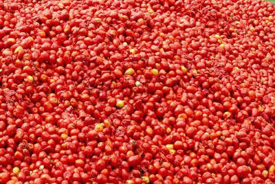 Hurl Tomatoes At La Tomatina