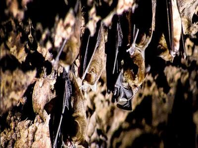 See The Bats Of Deer Cave