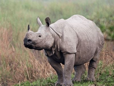 Spot Rhinos In The Wild