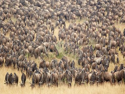 Witness The Great Migration